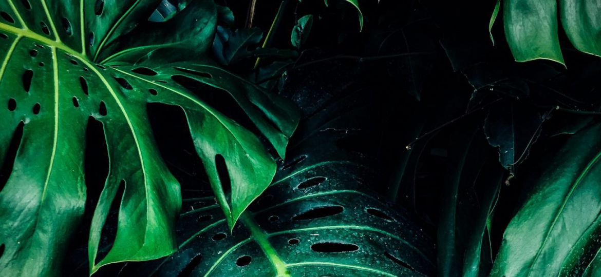 close-up-photo-of-green-leafed-plant-1407305-scaled-e1582140144106-1600x600